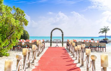Article-Living-Coral-Beach